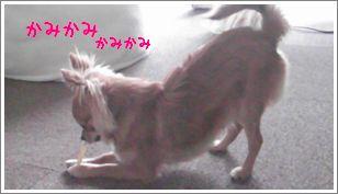 SANY016261.jpg