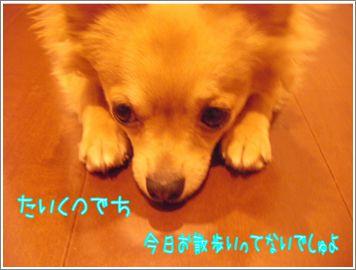 SANY06446111.jpg