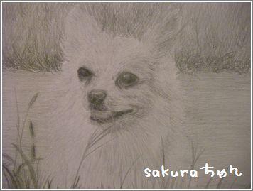 SANY0649sakura.JPG