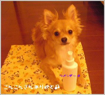 SANY067110.JPG