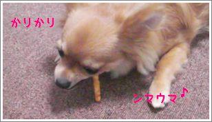 SANY110631[1].jpg